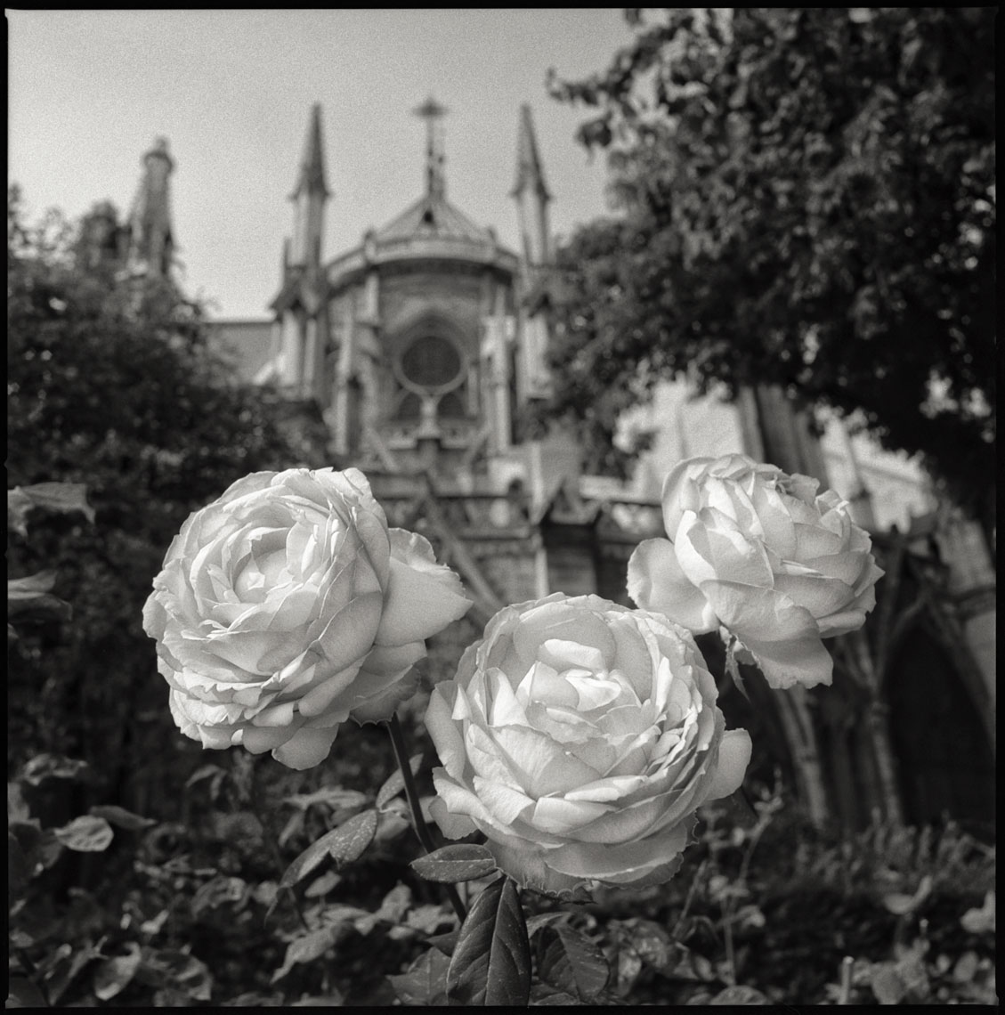 Paris-Botanicals-043-Edit